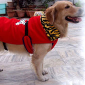 Zorba Designer High Quality Winter Coat for Medium Breed Dogs, red, 24 inches