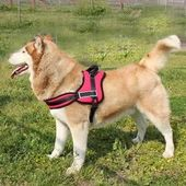 GP Heavy Duty Reflective Sports Dog Harness Set for Large Dogs, red, large