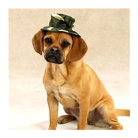 Zorba Designer Camouflaged Hat for Dogs, large