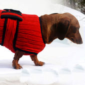 Zorba Designer Premium Winter Sweater for Toy Breed Dogs, red, 10 inches