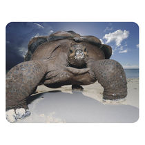 Wildlife Photographer Of Year Mouse Pad By Shopkeeda