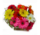 Giftacrossindia Ten Mix Colour Gerberas Bouquet (GAIMPHD0545), 1000 gms