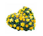 BAF 50 Yellow Seasonal Flowers Heart Shape Basket Gift, free shipping