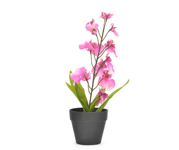 Forest Orchid Plant Mini Poty-@home By Nilkamal, Lavender