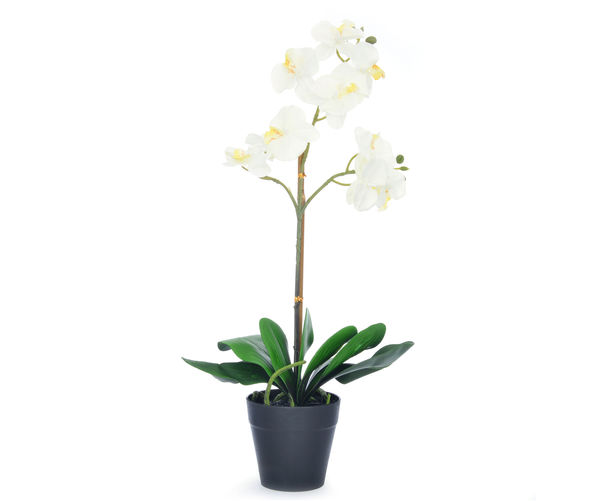 Forest Orchid Plant Pot - @home By Nilkamal, White