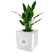 Mini Smart Pot Automatic desktop Hydroponic Smart Planter,