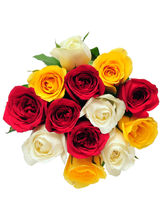 Ferns N Petals My Colorful Wishes - Rose Day